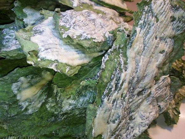Patatine di Foglie di Zucchina con Crema di Anacardi